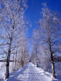 Snow on Country Road  Liminka  Finland