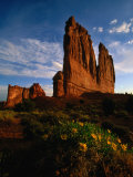 Courthouse Towers with Wildflowers in Foreground  Arches National Park  USA