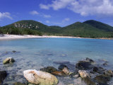 Coral  Salt Pond Bay  St John  USVI