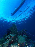 Outrigger Canoe  Milne Bay  Papua New Guinea