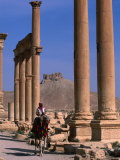 Rider on Camel Walking along the Colonnaded Street of Ruins  Palmyra  Syria