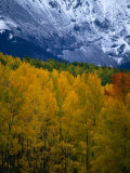 Mt Sneffel's Range in the San Juan Mountains  San Juan National Forest  USA