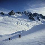 Fox Glacier and Mt Tasman South Westland  New Zealand