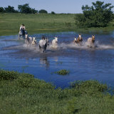 Herding Horses  Argentina