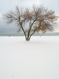 Tree and Snow