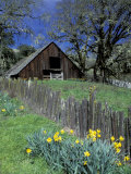 Fence  Barn and Daffodils  Northern California  USA