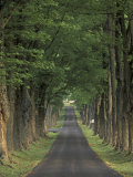 Tree-Lined Road  Louisville  Kentucky  USA