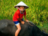 Boy Riding Water Buffalo  Mekong Delta  Vietnam