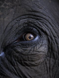 Elephant in Bandavgarh National Park  India