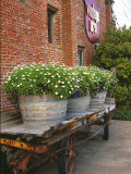 Flowers on Old Baggage Wagon  Vintage 1870 Shops  Napa Valley  California  USA