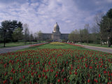 Tulips of State Capital Building  Frankfurt  Kentucky  USA