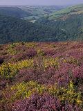 Cosgate Hill  Exmoor  Devon  England