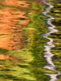 Refections of Fall Foliage and Birch Trees in Pond  Acadia National Park  Maine  USA