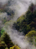 Mist Rising After Spring Rain in the Great Smoky Mountains National Park  Tennessee  USA