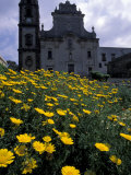 Baroque Style Cathedral and Yellow Daisies  Lipari  Sicily  Italy