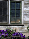 Old Barn with Cat in the Window  Whitman County  Washington  USA