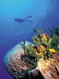 Scuba Diver Near Coral Wall  Bahamas