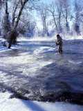 Flyfishing in Provo River on Cold Morning  Wasatch Mountains  near Heber  Utah  USA