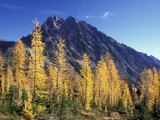 Mt Stuart with Golden Larch Trees  Alpine Lakes Wilderness  Washington  USA