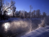 Rimed Trees and Morning Fog on Provo River  Wasatch Mountains  Utah  USA