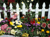 White Picket Fence and Flowers  Sammamish  Washington  USA