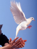 Man Releasing a Dove
