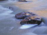 Sandstone Boulders in the Virgin River  Zion National Park  Utah  USA