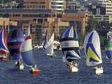 Duck Dodge Sailboat Race  Lake Union  Seattle  Washington  USA