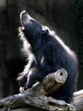 A Sloth Bear Enjoys the Morning Sun and a Passing Group of Tiny Midge Insects