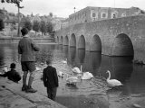 Children Feeding Swans at Bradford on Avon  October 1943