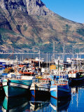 Fishing Boats in Hout Bay Marina  Cape Town  South Africa