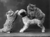 These Two Kittens Have Fun with a Toy Dog