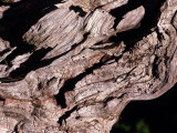 Wood Texture on Tree in the Mountains of Lazio Italy