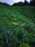 Hiking in the Coastal Hills Near Homer  Alaska