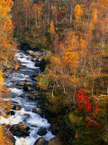 Mountain Stream in Autumn  Vindelfjallen Nature Reserve  Sweden