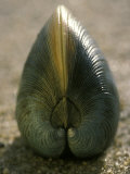 A Close View of a Clam Set on Its Edge in Sand