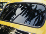 Reflections of Palm Trees in the Window of a Taxi
