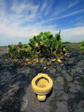 An Toilet on a Black Sand Beach with Cacti