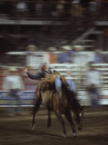 A Cowboy Rides a Bucking Bronco During a Rodeo  Steamboat Springs  Colorado