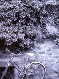 Bike and Wall  Heidelberg  Wurttemberg  Baden  Germany