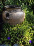 A Clay Planter Surrounded by Flowering Succulent Plants