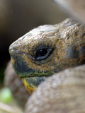 Profile of Giant Tortoise  La Galapaguera  Ecuador