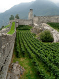 Castelgrande Vineyards and Fortified Walls  Bellinzona  Switzerland