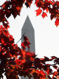 The Washington Monument Surrounded by the Brilliant Colored Leaves