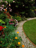 Close-up of Colourful Planting of Annuals and Half Hardy Exotics  Alongside Gravel Path