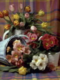 Primula and Tulipa  Vase and Basket on Ckecked Material