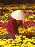 Woman in Straw Hat and Flowers  Mekong Delta  Vietnam