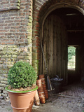 View Through Barn Doorway Buxus in Container Small Pots  Rake