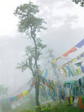Praying Flags in the Dochula Pass  Between Wangdi and Thimphu  Bhutan