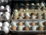 Fresh Farm Eggs are on Display at a Farmers Market in Madison  Wisconsin  United States